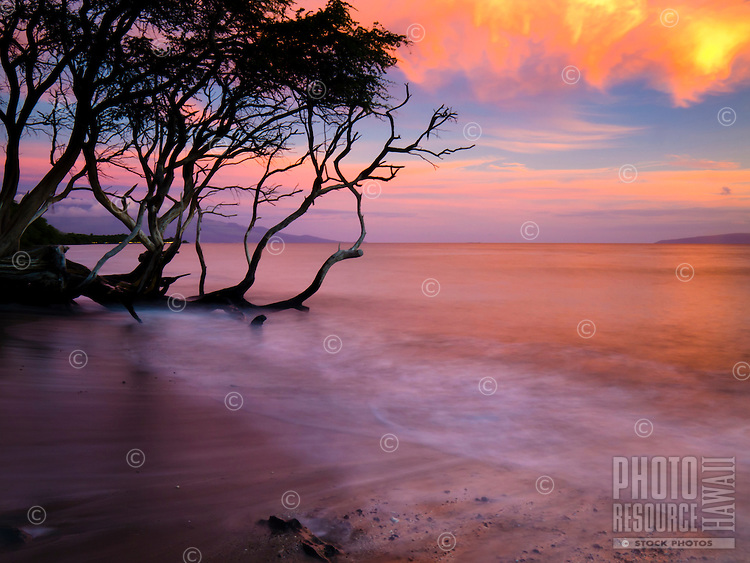 Waves reflecting a warm colorful sunset bathe a fallen tree at a sandy beach in Lahaina, Maui.
