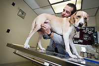 DVM student with dog in exam room