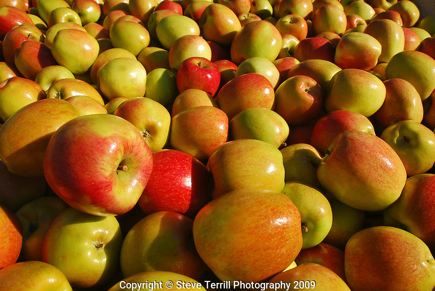 Apples in bin at fruit stand in Hubbard Oregon