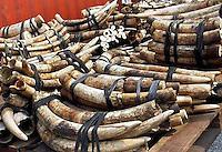 La Policía de Malasia decomisó 15 toneladas de colmillos de elefante africano y objetos de marfil valorados en unos 1,2 millones de dólares (959.000 euros), informaron este miércoles, 14 de diciembre, los medios locales.