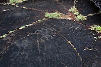 Human Figure Hawaiian Petroglyphs, Punalu'u Beach Park, Big Island