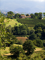 Italien, Latium, Berardelli bei Magliano Sabina: Weinbau in der Region Sabina   Italy, Lazio, Berardelli near Magliano Sabina: wine growing at Sabina region