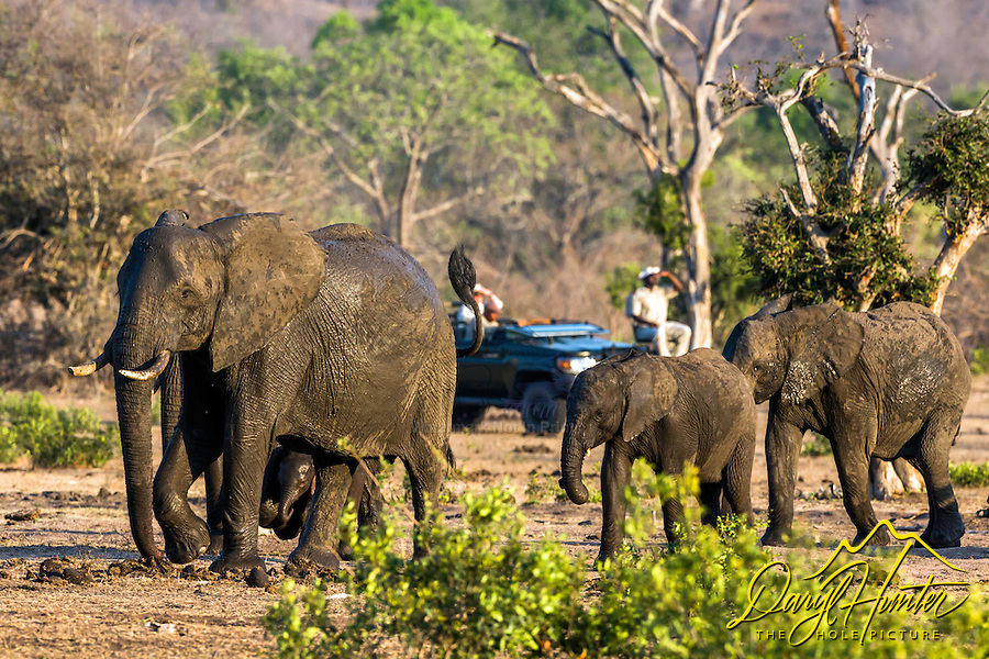 On safari at Sabi Sands Game Reserve in South Africa.