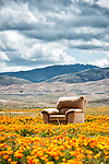 Big, stuffed and abandoned easy chair in a poppy field, Antelope Valley, Calif.