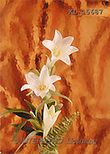 Interlitho, Erica, SYMPATHY, photos, white lilies(KL15687,#T#) Beileid, condolación