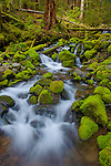 Olympic National Park, WA<br /> Small stream flows on moss covered rocks through and old growth hemlock forest in the upper Soleduck valley