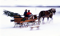 Blur motion of a one-horse open sleigh as a couple brings home a fresh Christmas tree.