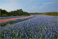 The clouds once lit in pastel pink and blue had begun to fade to night, but the Texas bluebonnets were motionless and the smell of pollen lingered in the air along this lonely dirt road. No one seemed to know about this place except some local cows and me, and I didn't mind. In my years of photographing wildflowers, this was one of my most memorable. This was the last picture of the evening before packing up and returning the two hours to my hill country home.