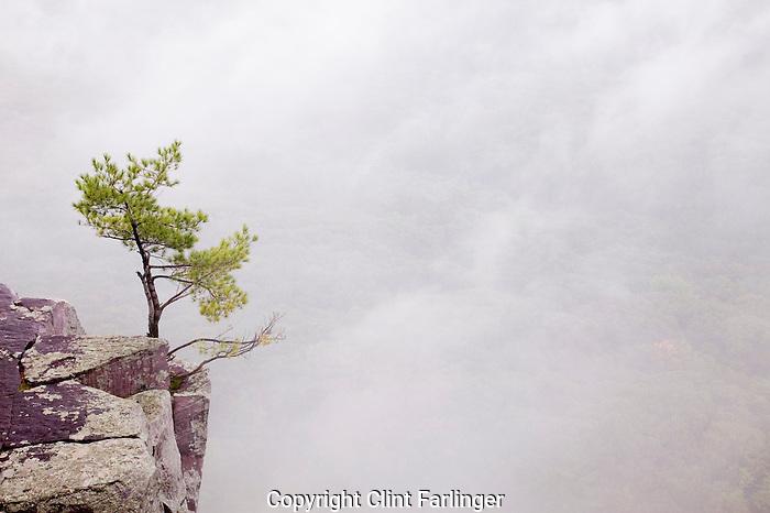 tree on East Bluff.Devil's Lake State Park.Baraboo Hills, Sauk County, Wisconsin