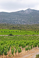 Domaine des Grecaux in St Jean de Fos. Montpeyroux. Languedoc. France. Europe. Vineyard. Mountains in the background. Mont Saint Baudille.