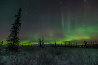 The aurora borealis near Eureka, Alaska.