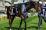 Horse Highland Reel ridden Ryan Moore wins the Longines Hong Kong Vase (G1, 2400m) during the Longines Hong Kong International Races at Sha Tin Racecourse on December 10 2017, in Hong Kong, Hong Kong. Photo by Victor Fraile / Power Sport Images