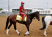 LOUISVILLE, KENTUCKY - APRIL 30: Classic Empire, owned by John Oxley and trained by Mark E. Casse, exercises in preparation for the Kentucky Derby at Churchill Downs on April 30, 2017 in Louisville, Kentucky. (Photo by Jon Durr/Eclipse Sportswire/Getty Images)