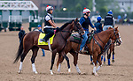 LOUISVILLE, KENTUCKY - APRIL 30: War of Will, trained by Mark Casse, exercises in preparation for the Kentucky Derby at Churchill Downs in Louisville, Kentucky on April 30, 2019. Scott Serio/Eclipse Sportswire/CSM