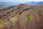 View of the Thomas Divide, Great Smoky Mountains National Park, NC, USA