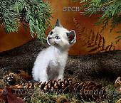 Xavier, ANIMALS, cats, photos, SPCHCATS691,#A# Katzen, gatos