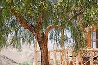 A tree provides shade on the terrace of the Irocha guest house in the small farming village of Tisselday in Morocco's Atlas Mountains.