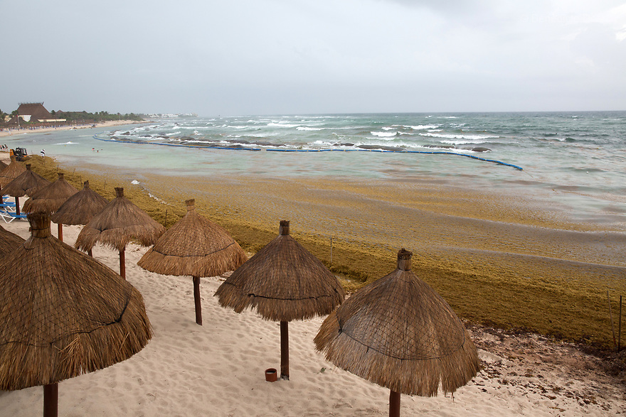 Mexico: Masses of Sargassum seaweed washing up on Caribbean beaches