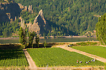 Vegetable Farm on the Columbia River Gorge, White Salmon, Washington