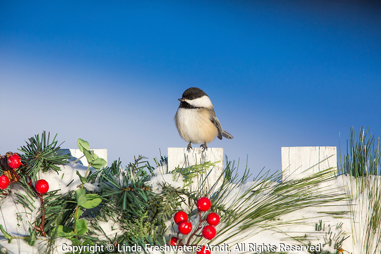 Black-capped chickadee on a festive backyard fence