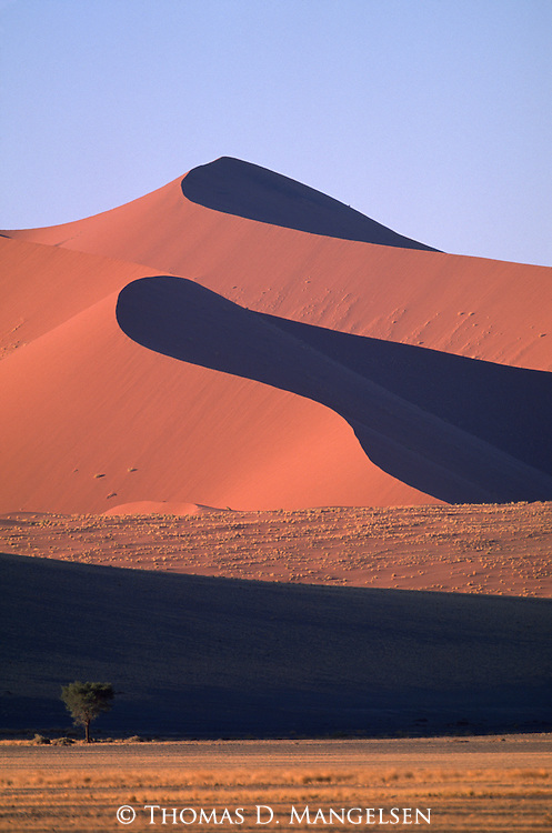 Towering sand dunes of the Little Kulala region in Sossusvlei, Namibia.