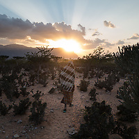 Jan. 02, 2015 - Socotra, Yemen. A goat herder walks home from feeding his goats. Goat herders visit their goats everyday or every other day to feed them food supliments. © Nicolas Axelrod / Ruom