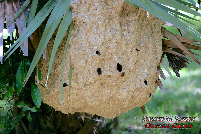 Very Large Bee Hive