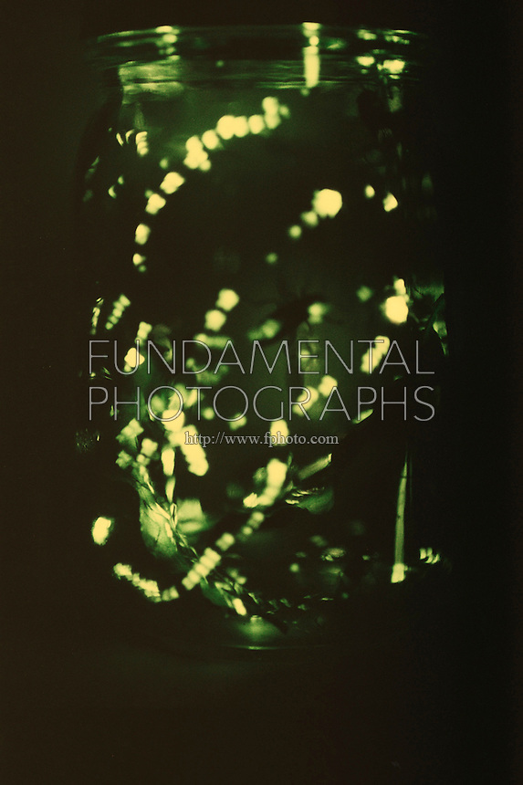 FIREFLIES (LIGHTNING BUGS).Photinus Pyralis. Flashing In Jar At Night.A firefly flashes when O2, breathed in through the abdominal tracheae, combines with the substance luciferin under the catalytic effect of the enzyme luciferase. The light is 90-98% efficient.