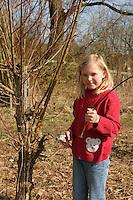 Kind, Mädchen schneidet mit einer Astschere Zweige von einer Kopfweide, Weide, Weiden, Salix, Sallow, Willow, Pollard Willow