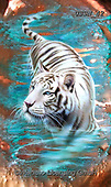Sandi, REALISTIC ANIMALS, REALISTISCHE TIERE, ANIMALES REALISTICOS, paintings+++++copperwhitetiger,USSN42,#a#, EVERYDAY,tiger,tigers ,puzzles