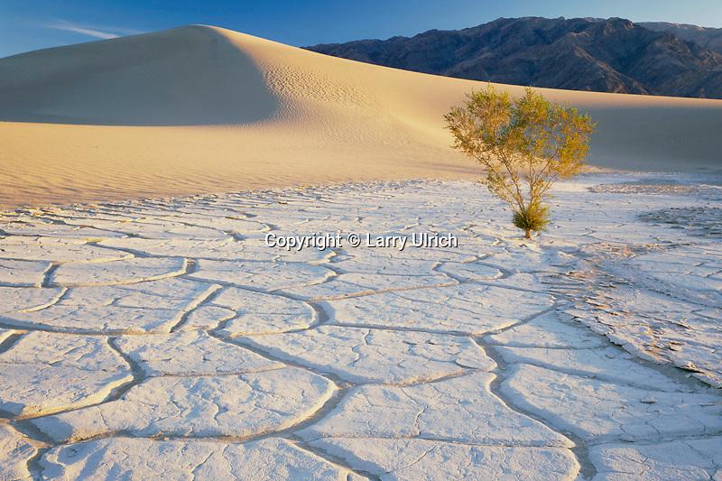 Playa and creasotebush<br /> Mesquite Flat Dunes<br /> Death Valley National Park<br /> Mojave Desert, California