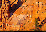 Bryce Canyon Landscape at Sunrise, Sunset Point, Bryce Canyon National Park, Utah