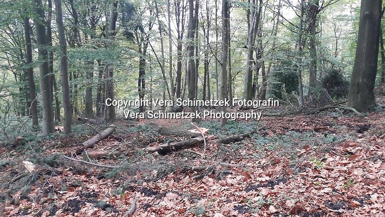 Europe, Germany, Ruhr Area, Ardey, Wetter, Herdecke, Forstarbeiten und Rodungen, Bodenverdichtung durch Harvester<br /> <br /> Europa, Deutschland, Ruhrgebiet, Ardey, Wetter, Herdecke, forest work and deforestation, soil compaction by harvesting machines<br /> <br /> [MODEL RELEASE: NO, Copyright: Vera Schimetzek, Bornstrasse 5, 58300 Wetter, Germany, phone: 0049.2335.970650, mobil: 0049.151.21220918, www.schimetzek-foto.de, schimetzek@web.de,<br /> Die Verwendung des Fotos ist honorarpflichtig. Keine Verwendung ohne Genehmigung.  Es gelten die AGB.<br /> For use the general terms and conditions are mandatory. No use without permission. The use of the image is subject to a fee.]