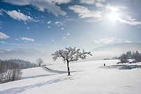 Deutschland, Oberbayern, Chiemgau, zwischen Siegsdorf und Ruhpolding: Winterspaziergang in traumhafter Winterlandschaft | Germany, Upper Bavaria, Chiemgau, between Ruhpolding and Siegsdorf: winter scenery, walking