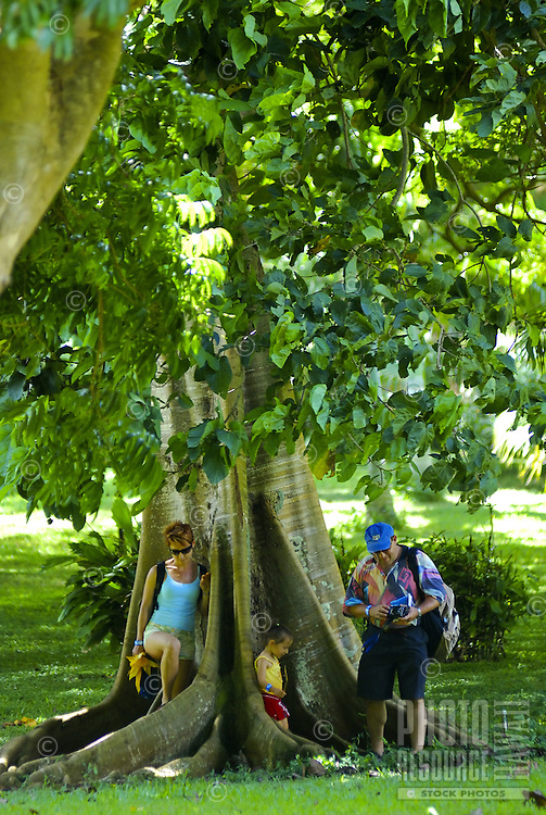 A family nestles in the unique roots of a banyan tree  trunk at McBryde gardens, Kauai, which are part of the 5 National Tropical Botanical gardens in the US.