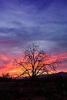 Toroweap at Sunset in the Grand Canyon Arizona