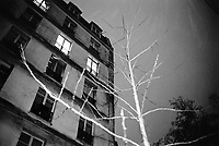 France. Ile-de-france Department. Paris. Night life. A window of a flat with lights in the darkness. Electric lighting. Tree trunk. Winter season. 24.02.05 © 2005 Didier Ruef