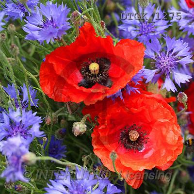 Gisela, FLOWERS, photos(DTGK1275,#F#) Blumen, flores, retrato