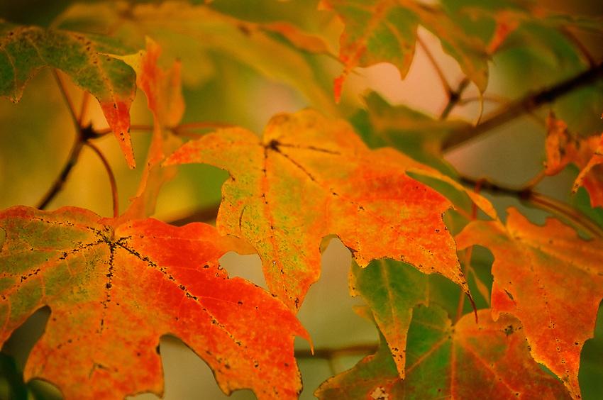 Fall in Virginia, Fuji Velvia 35mm Film