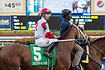 HALLANDALE BEACH, FL - JAN 13:Shining Copper #5 with Jose Ortiz in the irons prepares to run the $200,000 Fort Lauderdale Stakes for trainer Michael J. Maker at Gulfstream Park on January 13, 2018 in Hallandale Beach, Florida. (Photo by Bob Aaron/Eclipse Sportswire/Getty Images