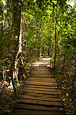 PHILIPPINES, Palawan, Sabang, a path through the jungle that leads to the entrance of the Underground River