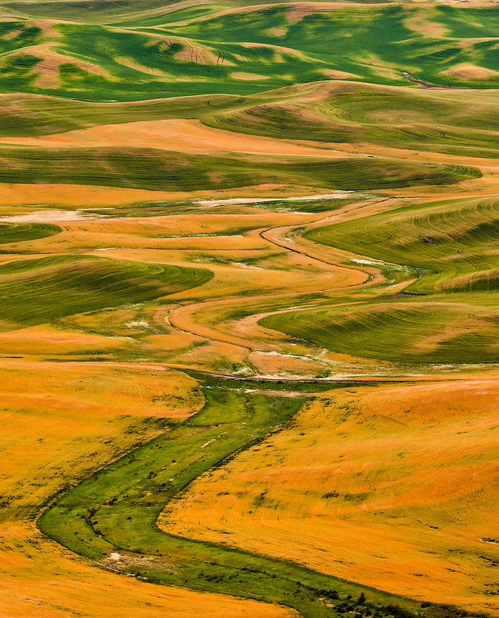 Curvy patterns emerge in the ripening wheat as seen from Steptoe Butte in the Palouse.