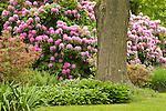 Backyard perennial garden in June.