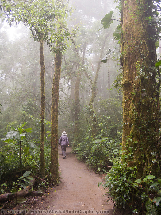 Monte Verde Cloud Forest, Costa Rica, Central America
