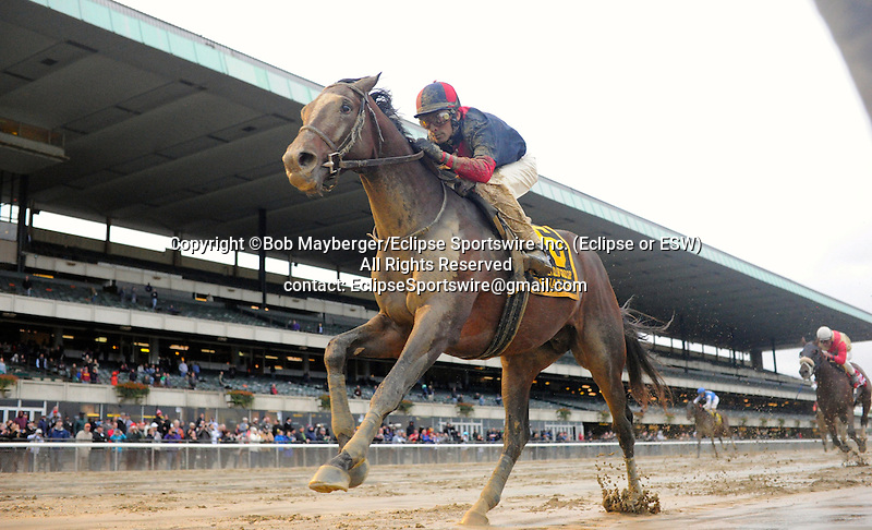 Tonalist (no. 6) ridden by John Velazquez and trained by Christophe Clement, wins the grade 1 Jockey Club Gold Cup for older horses on October 3, 2015 at Belmont Park in Elmont (Bob Mayberger/Eclipse Sportswire)