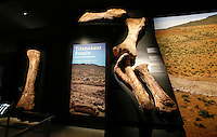 A bones from the The Titanosaur, the largest dinosaur ever displayed at the American Museum of Natural History, is revealed on it's first day open to the public   in New York. 15.01.2016. Kena Betancur/VIEWpress