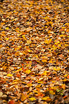 Carpet of color.  Photo by Kevin Bain/University Communications Photography