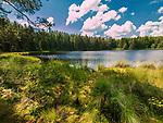 """Wigierski Park Narodowy - ścieżka edukacyjna """"Suchary"""", Polska<br /> Wigry National Park - educational trail """"Suchary"""", Poland"""
