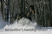 Bob, ANIMALS, REALISTISCHE TIERE, ANIMALES REALISTICOS, horses, photos+++++,GBLA3698,#a#, EVERYDAY