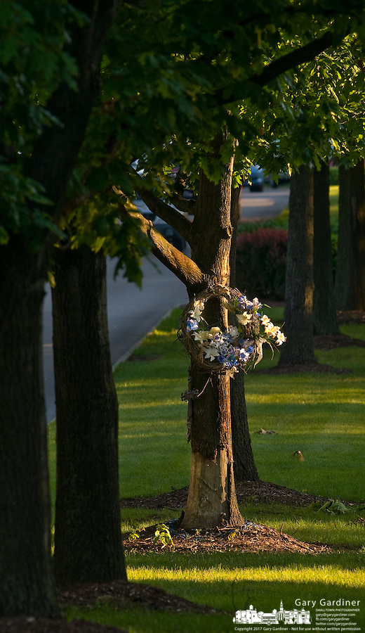 Morning sunlight strikes a roadside memorial made of a wreath with flowers attached to a tree in the median of a neighborhood roadway.